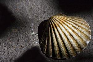 Pilgrim shells on the road
