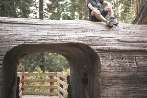 Young man over a sequoia trunk