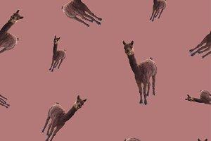 pattern,seamless  with a llama