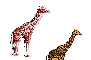 giraffes,illustration isolated