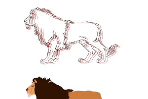 Lion king. Vector isolated animal.
