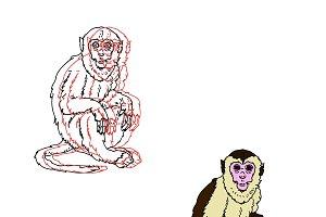 Capuchin monkey on a white backgroun