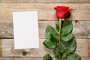 Red rose and blank greeting card
