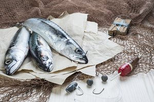 Mackerels and fishing gear