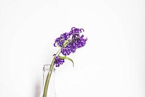 Purple Plower