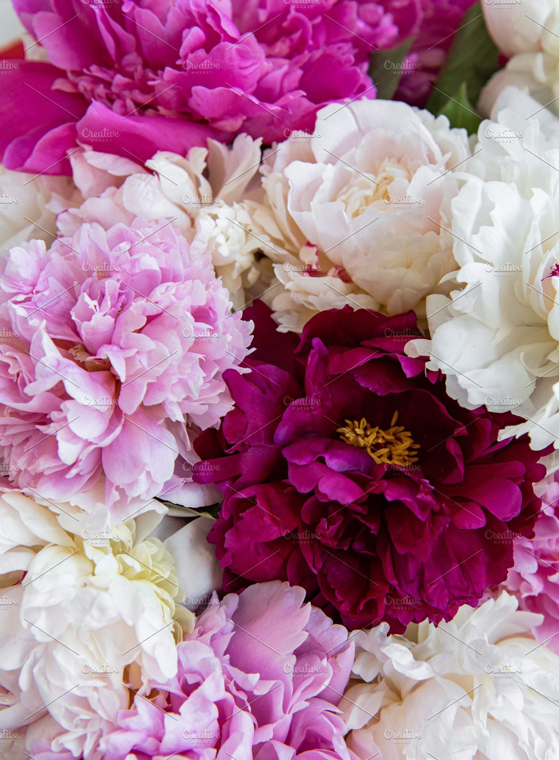 Peony Flowers As A Background High Quality Holiday Stock Photos