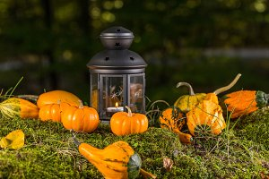 Autumn ornamental pumpkins