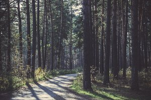 Asphalt road in the forest
