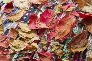 Autumn leaves on a hand-woven rug