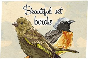 Beautiful Birds.