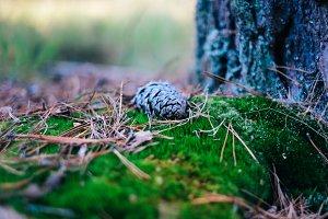 pine and moss