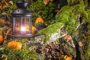 Halloween pumpkins in autumn forest