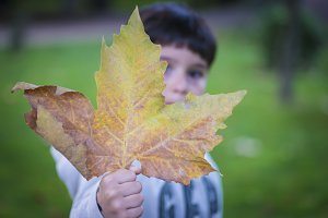 Child holding a leaf in autumn