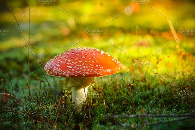 Red Mushroom in the Morning. LIVE - Food & Drink