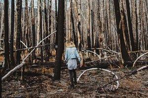 Devastated Forest