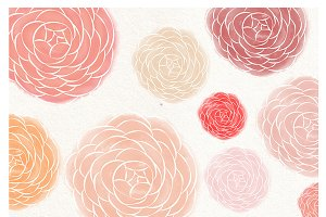 Ranunculus flower watercolor