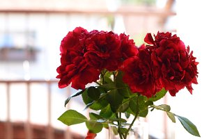 Bunch of wine red roses