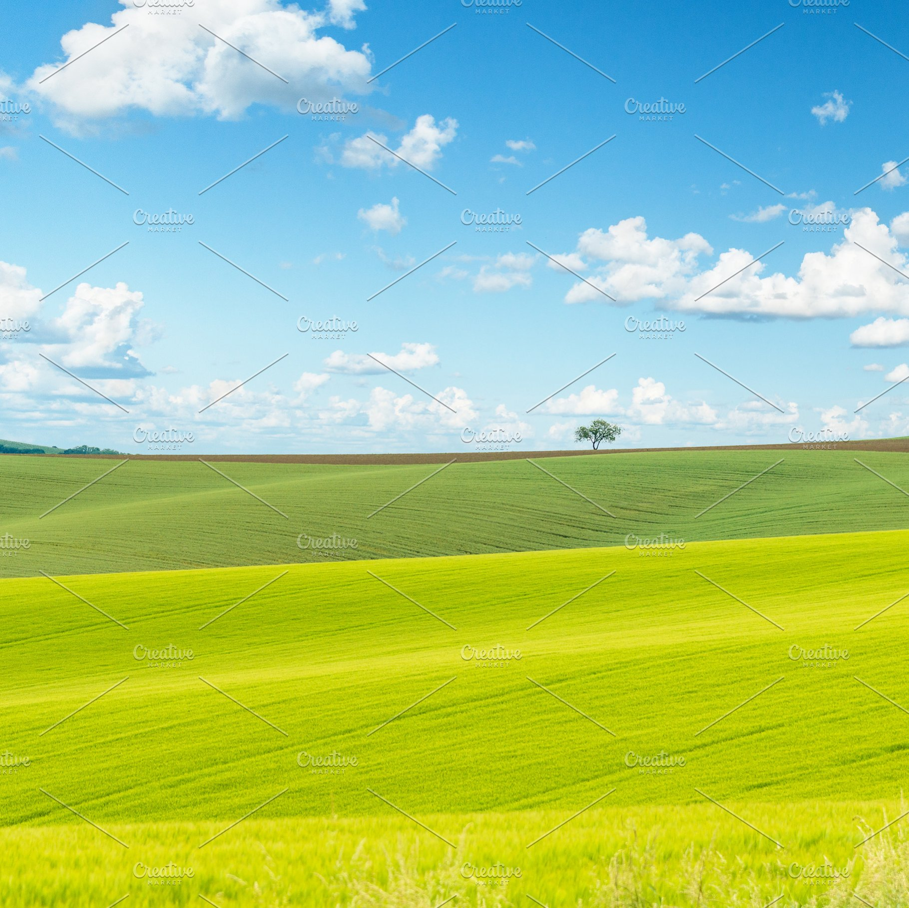 Green field background | High-Quality Nature Stock Photos ...