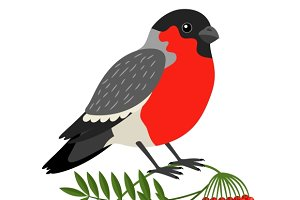 Bullfinch Christmas Bird