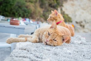 Cute cats at the beach wall