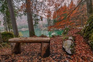Bench in autumn at the lake