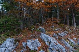 Autumn scenery at lake Fusine