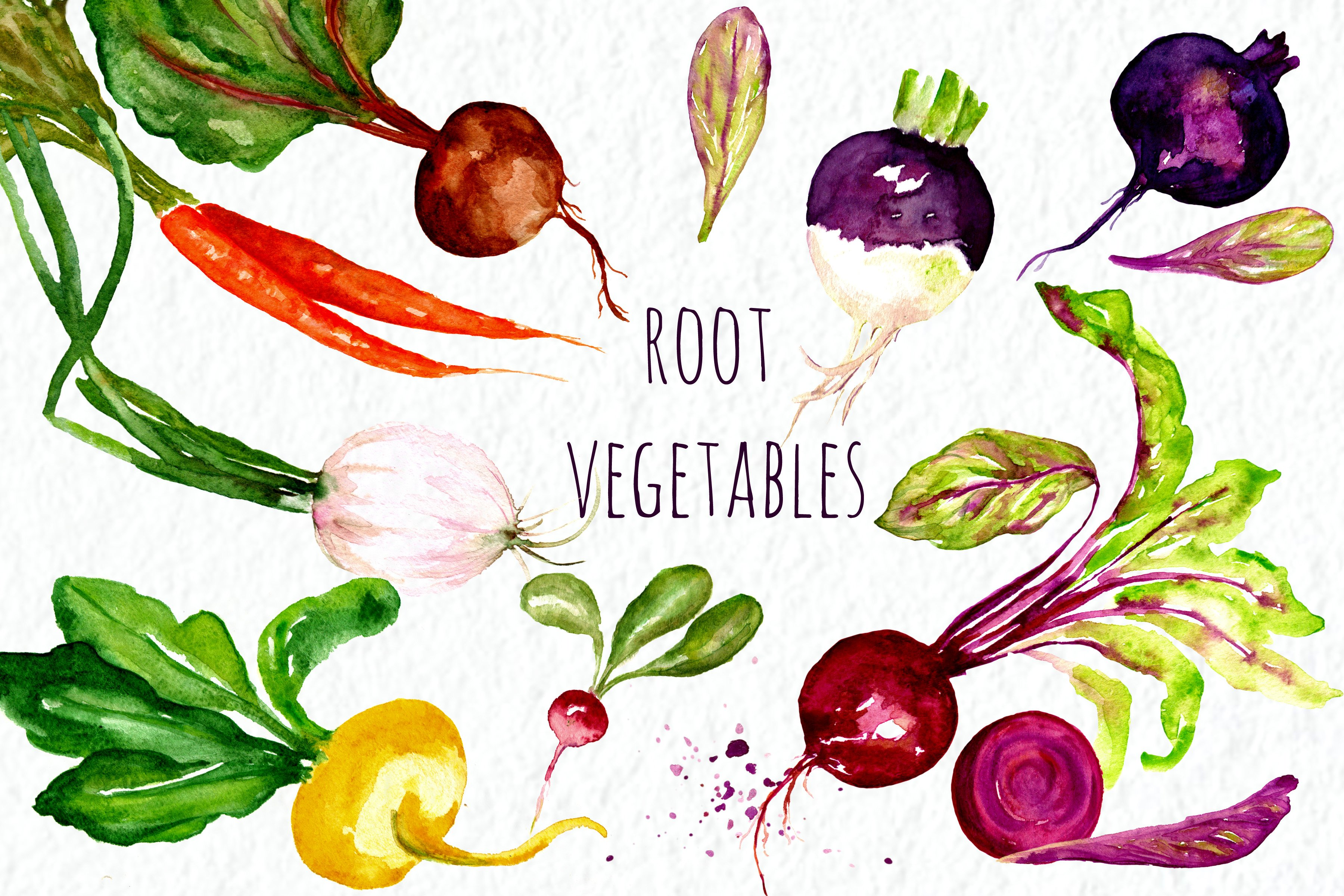 Root vegetables. Watercolor Clip Art ~ Graphics ~ Creative ...