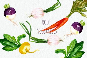 Root vegetables. Watercolor Clipart
