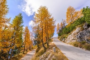 Road with beautiful autumn larches