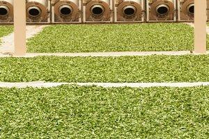 Privatization tea