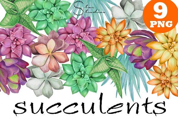 Succulents pack