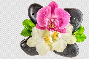 Orchid flower with water drops PNG