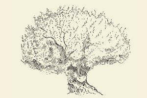 Old olive tree illustration