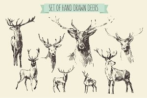 Big set of hand drawn deer
