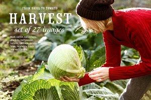 27 Harvest images bundle