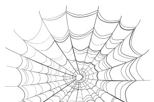 Complicated spider web