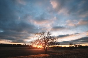 Lone sunrise tree