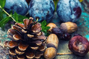 Empty autumn pinecone,acorns and che
