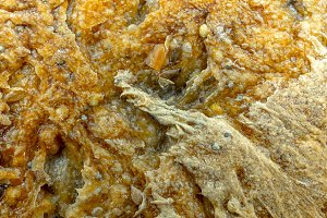 ecological bread texture
