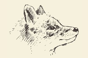 Illustration of fox head
