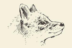 Illustration of fox head