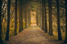 Autumn Perspective in Forest