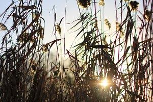 Flying reeds