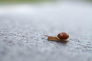 Snail crawling on asphalt