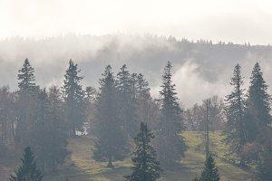 Brumes dans le Jura
