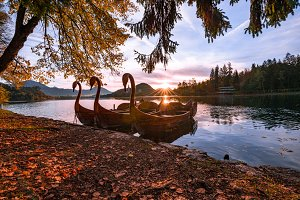 Swan boats at sunrise at lake Bled