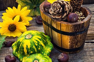 Autumn still life with squash