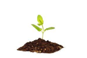Tiny baby plant birth grow concept