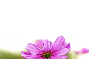 abstract close-up flower background