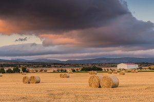 Straw bales in the field at sunset